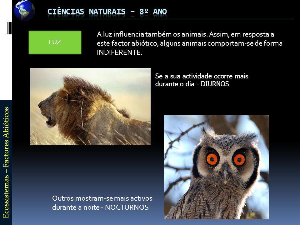 E c o s s i s t e m a s – F a c t o r e s A b i ó t i c o s LUZ A luz influencia também os animais.