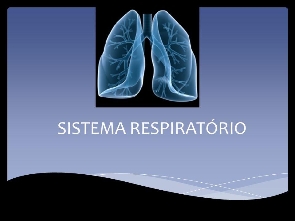 RESPIRAÇÃO O sistema respiratório resolve o problema das trocas gasosas entre as células do organismo e o meio ambiente, pois permite que o oxigénio seja recebido pelo organismo e o dióxido de carbono seja libertado.