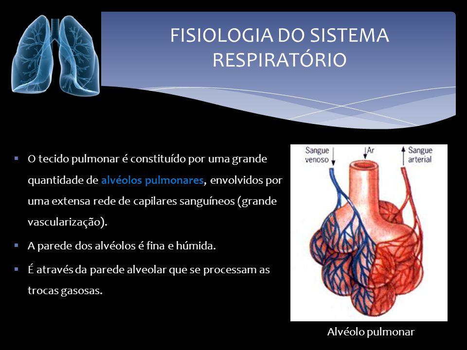 FISIOLOGIA DO SISTEMA RESPIRATÓRIO O tecido pulmonar é constituído por uma grande quantidade de alvéolos pulmonares, envolvidos por uma extensa rede d