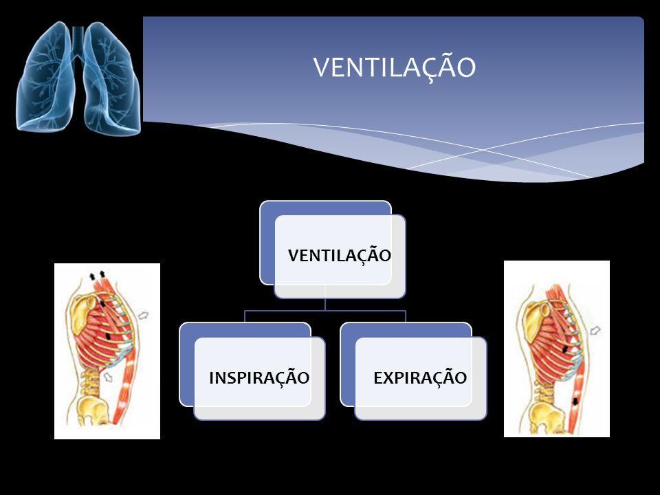 VENTILAÇÃO - INSPIRAÇÃO Contração dos músculos intercostais.
