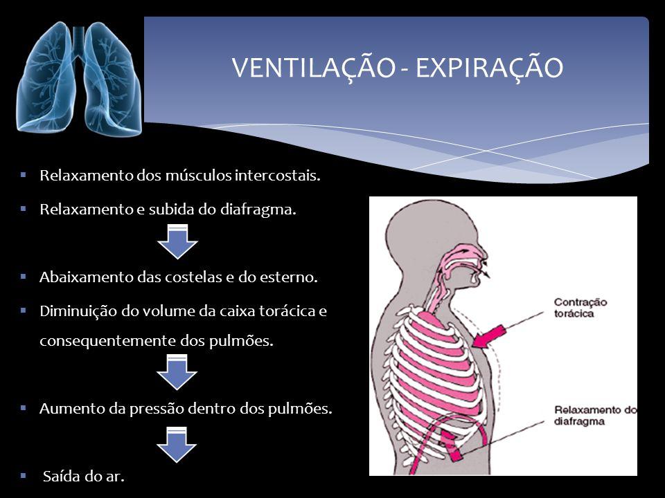 VENTILAÇÃO - EXPIRAÇÃO Relaxamento dos músculos intercostais. Relaxamento e subida do diafragma. Abaixamento das costelas e do esterno. Diminuição do