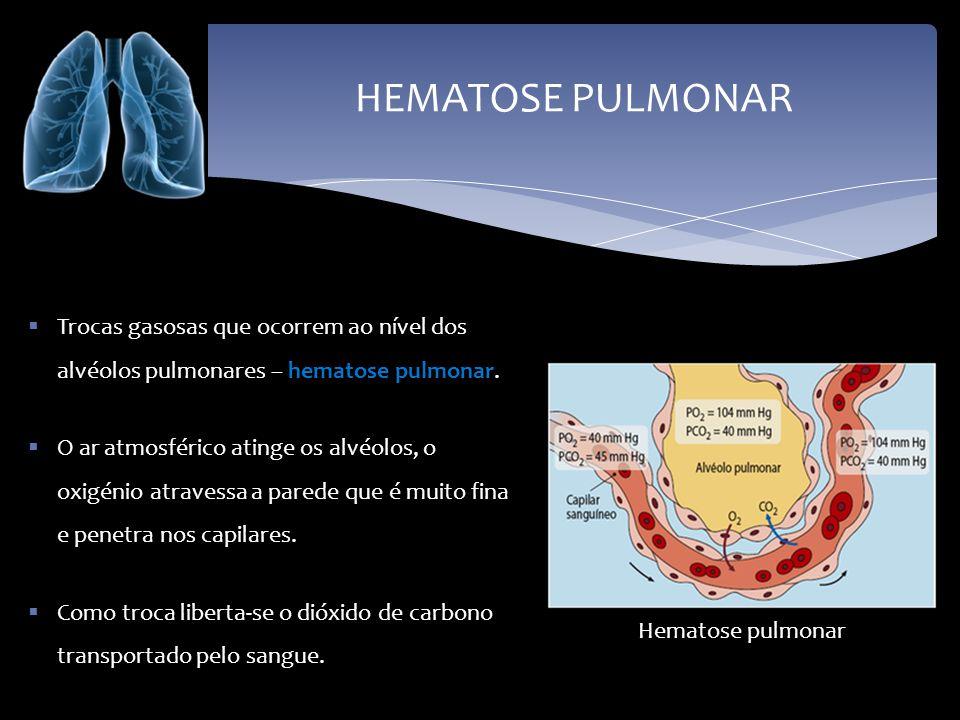 HEMATOSE PULMONAR Trocas gasosas que ocorrem ao nível dos alvéolos pulmonares – hematose pulmonar. O ar atmosférico atinge os alvéolos, o oxigénio atr