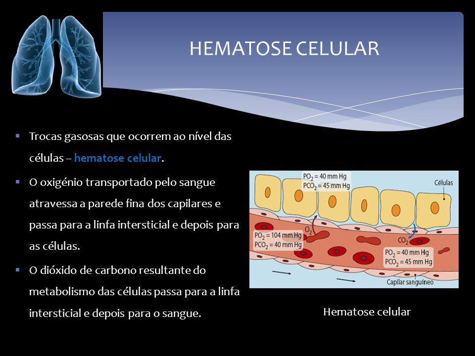 HEMATOSE CELULAR Trocas gasosas que ocorrem ao nível das células – hematose celular. O oxigénio transportado pelo sangue atravessa a parede fina dos c