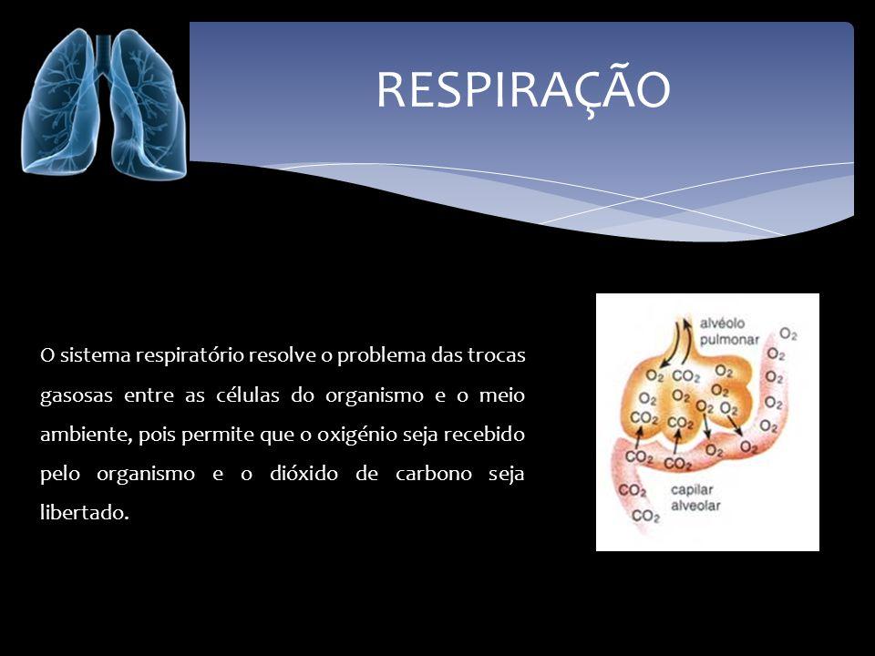 RESPIRAÇÃO O sistema respiratório resolve o problema das trocas gasosas entre as células do organismo e o meio ambiente, pois permite que o oxigénio s