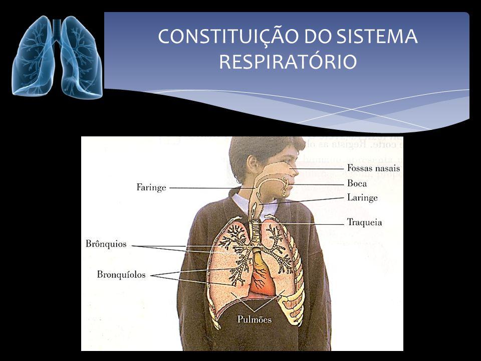 FISIOLOGIA DO SISTEMA RESPIRATÓRIO Fossas nasais são duas cavidades paralelas que começam nas narinas e terminam na faringe.