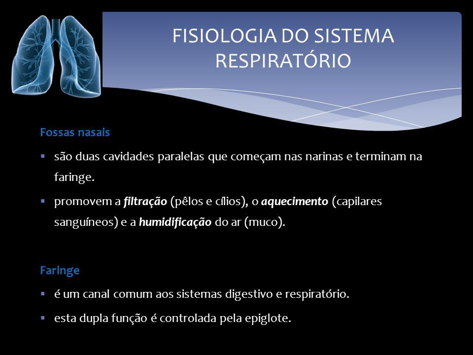 FISIOLOGIA DO SISTEMA RESPIRATÓRIO Laringe é a continuação da faringe.