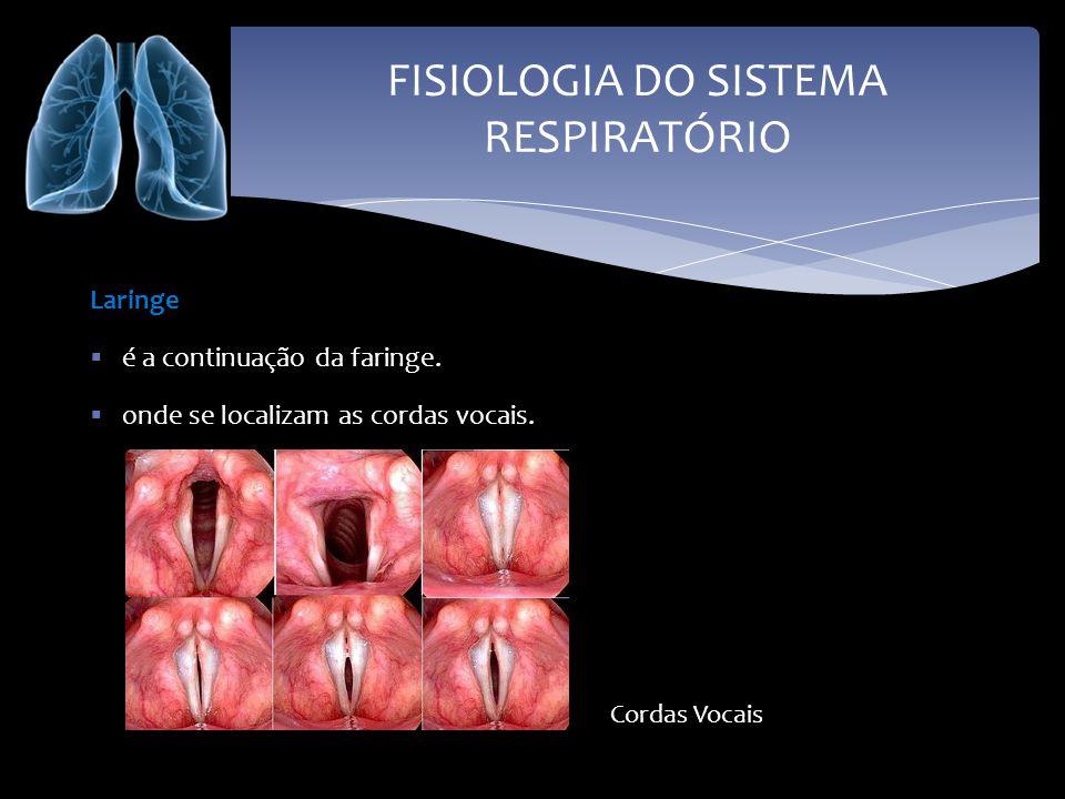 FISIOLOGIA DO SISTEMA RESPIRATÓRIO Laringe é a continuação da faringe. onde se localizam as cordas vocais. Cordas Vocais