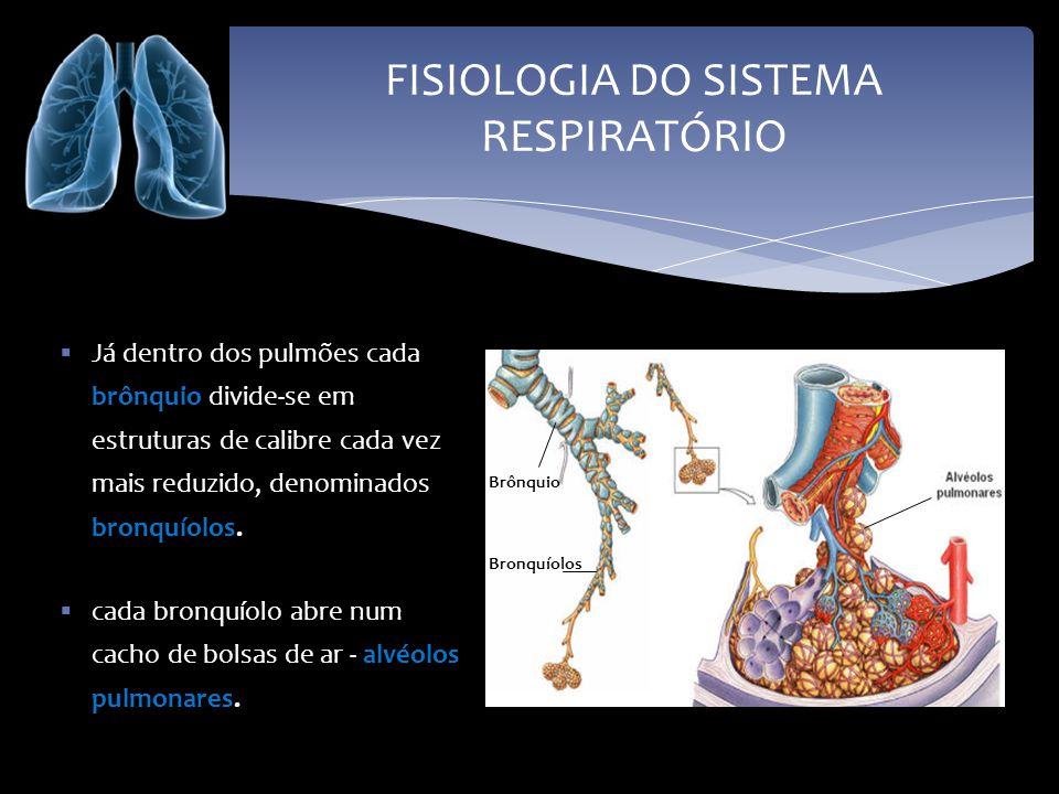 FISIOLOGIA DO SISTEMA RESPIRATÓRIO Já dentro dos pulmões cada brônquio divide-se em estruturas de calibre cada vez mais reduzido, denominados bronquío