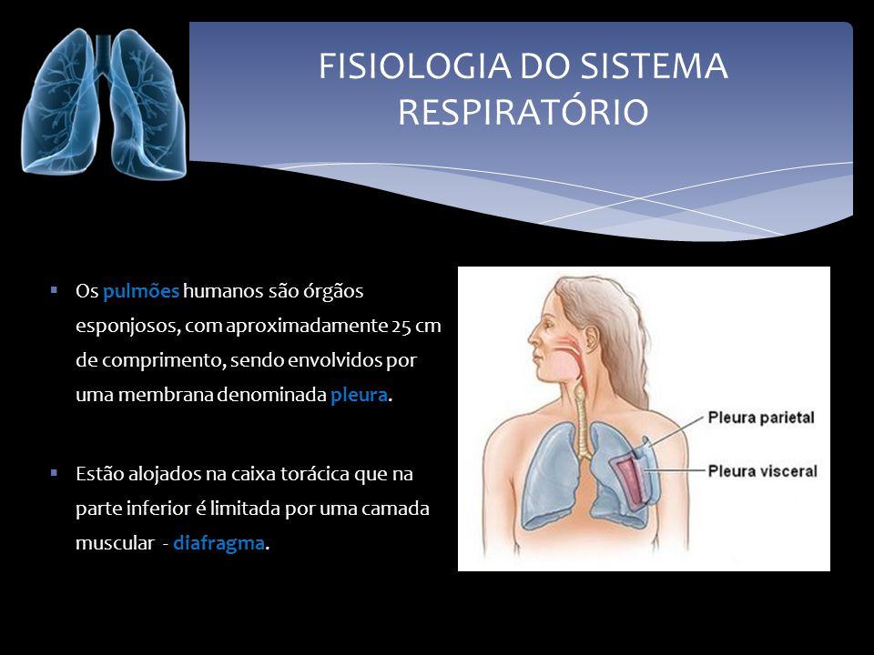 FISIOLOGIA DO SISTEMA RESPIRATÓRIO Os pulmões humanos são órgãos esponjosos, com aproximadamente 25 cm de comprimento, sendo envolvidos por uma membra
