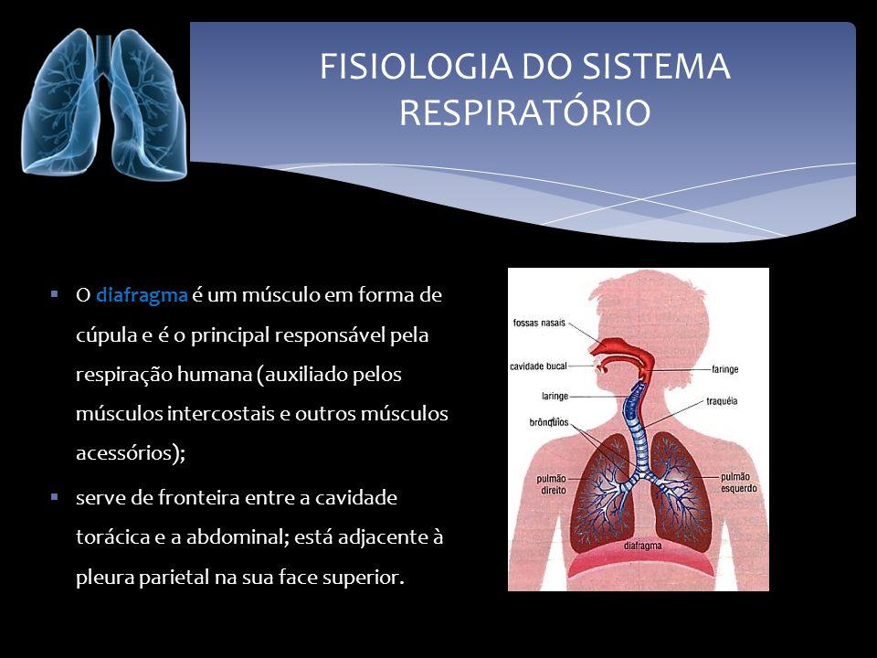 FISIOLOGIA DO SISTEMA RESPIRATÓRIO O tecido pulmonar é constituído por uma grande quantidade de alvéolos pulmonares, envolvidos por uma extensa rede de capilares sanguíneos (grande vascularização).