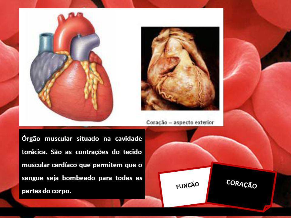 FUNÇÃO CORAÇÃO Órgão muscular situado na cavidade torácica.