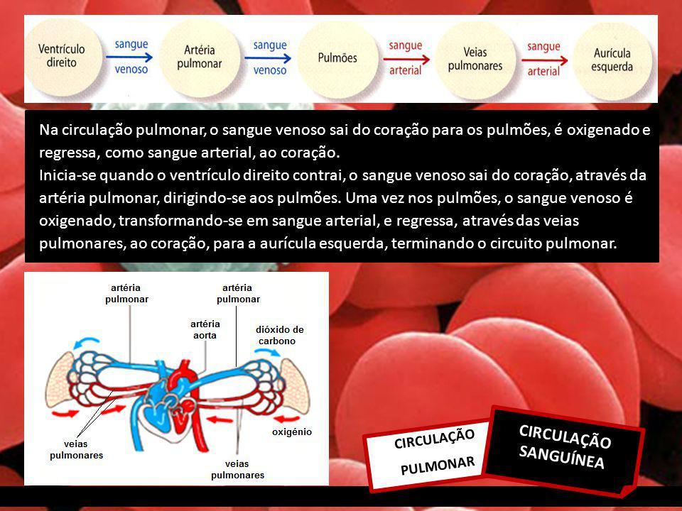 CIRCULAÇÃO PULMONAR CIRCULAÇÃO SANGUÍNEA Na circulação pulmonar, o sangue venoso sai do coração para os pulmões, é oxigenado e regressa, como sangue arterial, ao coração.