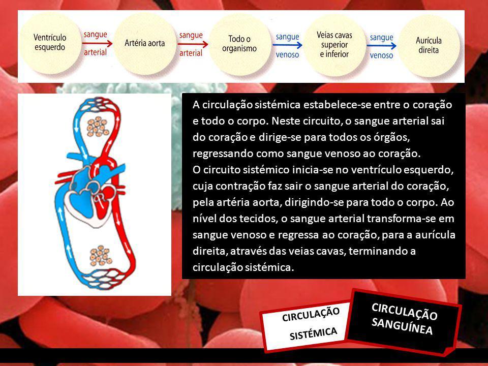 CIRCULAÇÃO SISTÉMICA A circulação sistémica estabelece-se entre o coração e todo o corpo.