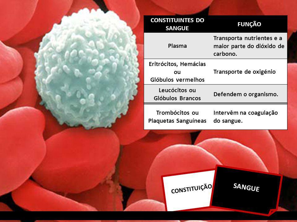 CONSTITUIÇÃO SANGUE CONSTITUINTES DO SANGUE FUNÇÃO Plasma Transporta nutrientes e a maior parte do dióxido de carbono.