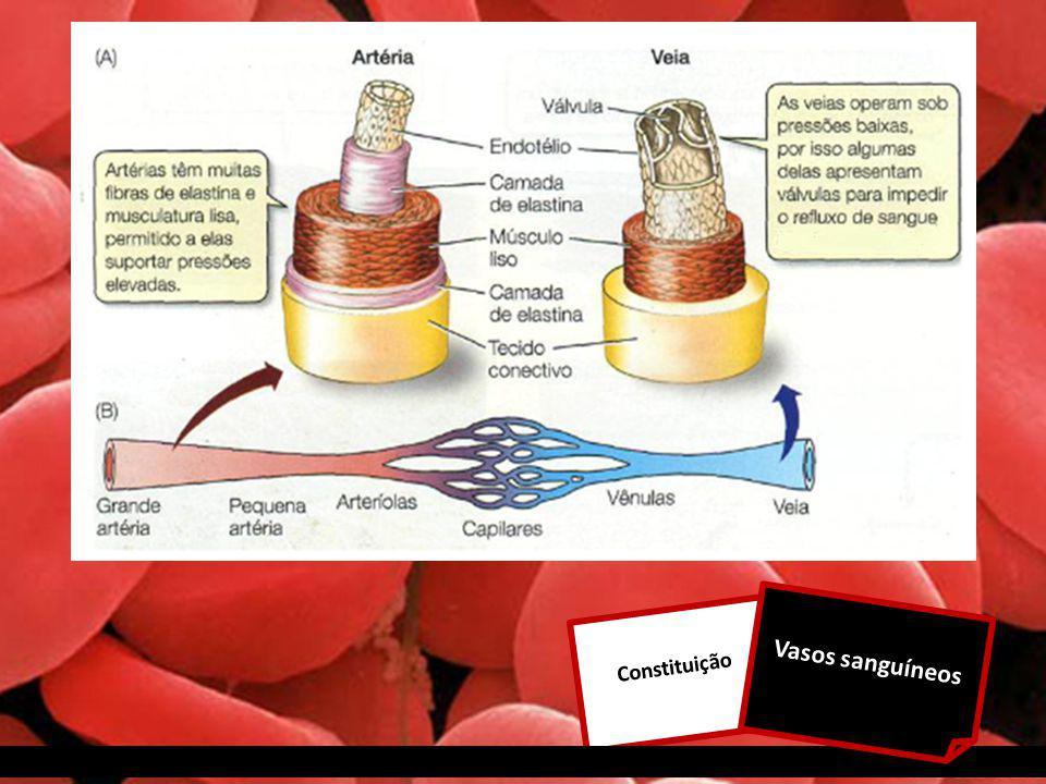 Constituição Vasos sanguíneos