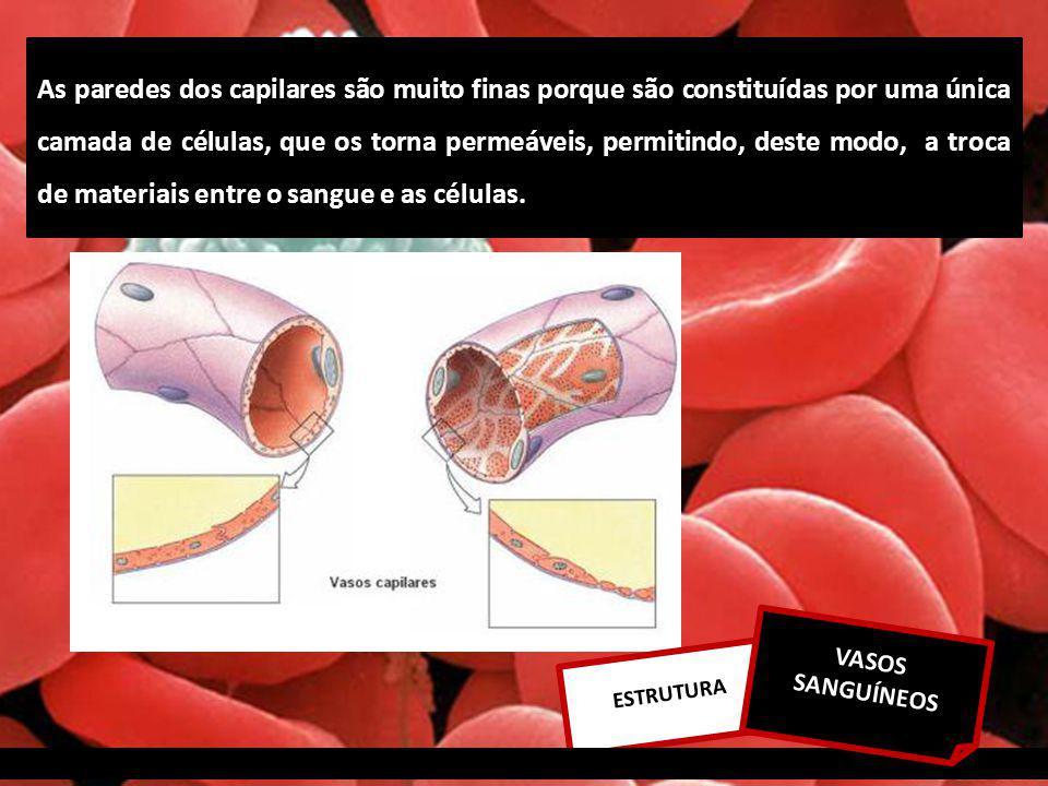 ESTRUTURA VASOS SANGUÍNEOS As paredes dos capilares são muito finas porque são constituídas por uma única camada de células, que os torna permeáveis, permitindo, deste modo, a troca de materiais entre o sangue e as células.