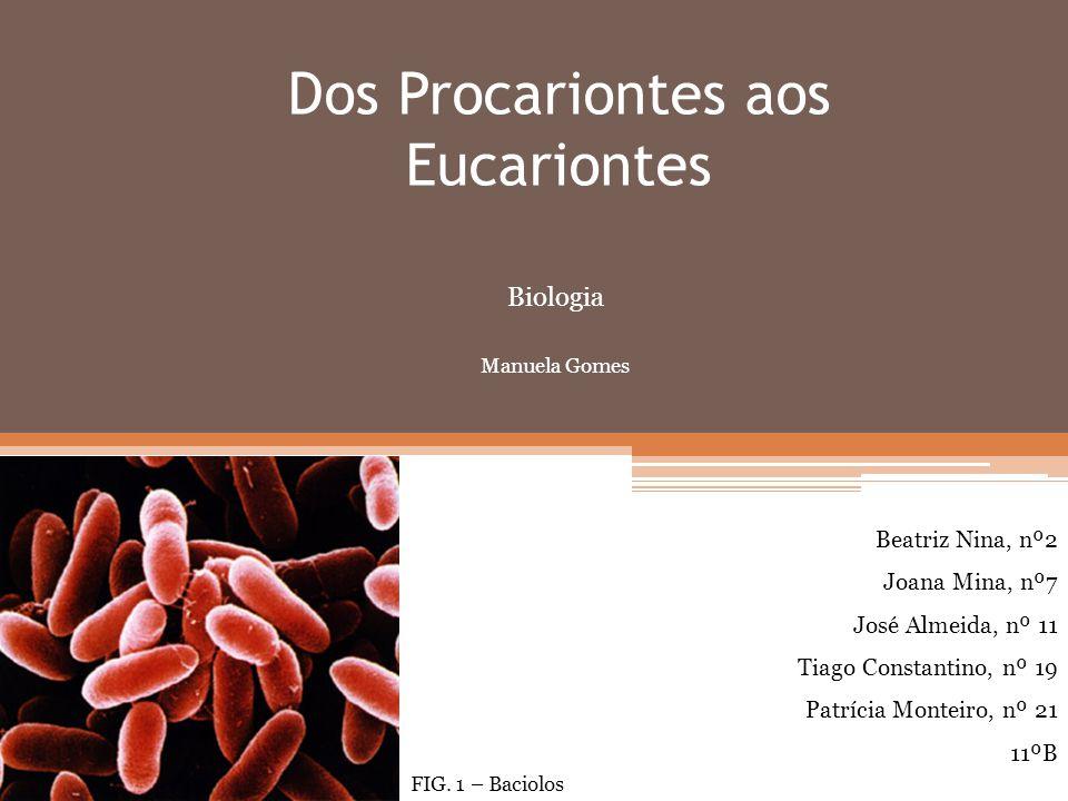 Dos Procariontes aos Eucariontes FIG. 1 – Baciolos Biologia Manuela Gomes Beatriz Nina, nº2 Joana Mina, nº7 José Almeida, nº 11 Tiago Constantino, nº