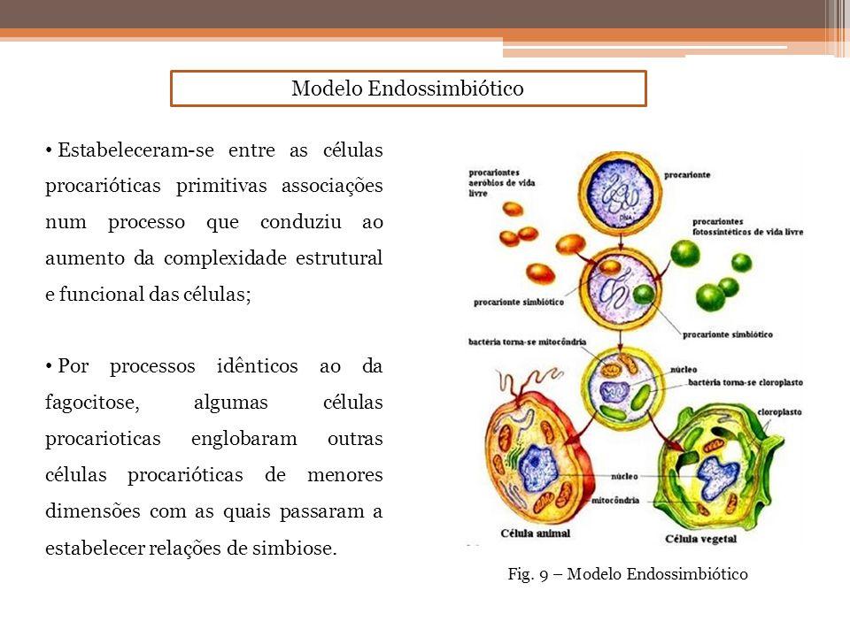 Estabeleceram-se entre as células procarióticas primitivas associações num processo que conduziu ao aumento da complexidade estrutural e funcional das