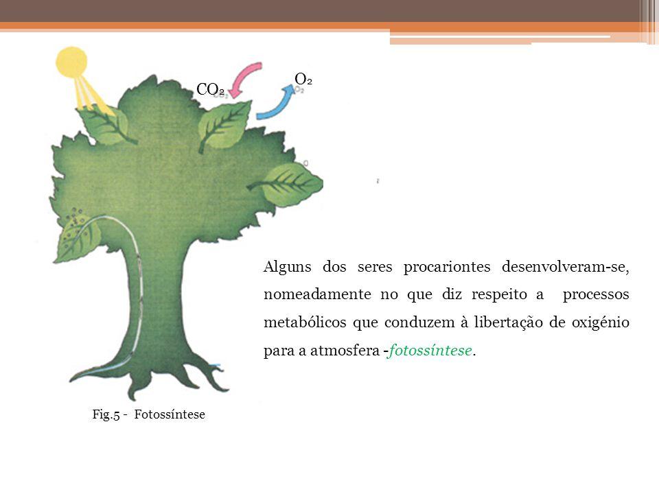 CO 2 O2O2 Alguns dos seres procariontes desenvolveram-se, nomeadamente no que diz respeito a processos metabólicos que conduzem à libertação de oxigén