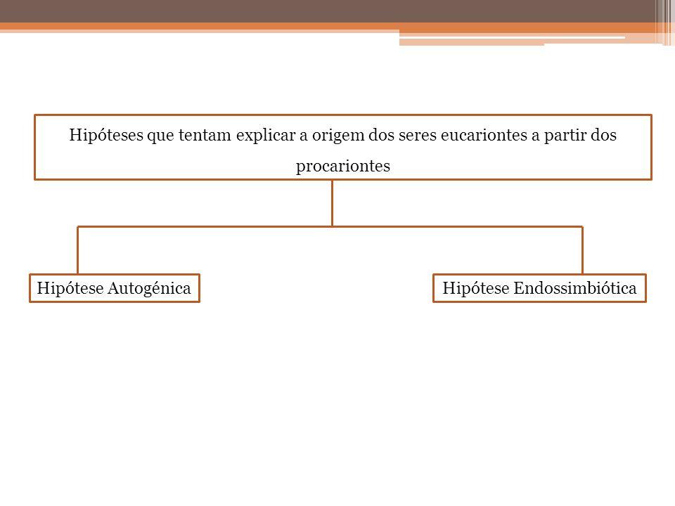 Hipóteses que tentam explicar a origem dos seres eucariontes a partir dos procariontes Hipótese AutogénicaHipótese Endossimbiótica