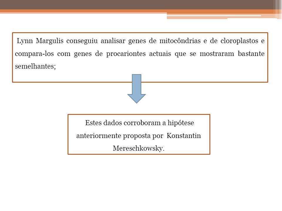 Lynn Margulis conseguiu analisar genes de mitocôndrias e de cloroplastos e compara-los com genes de procariontes actuais que se mostraram bastante sem