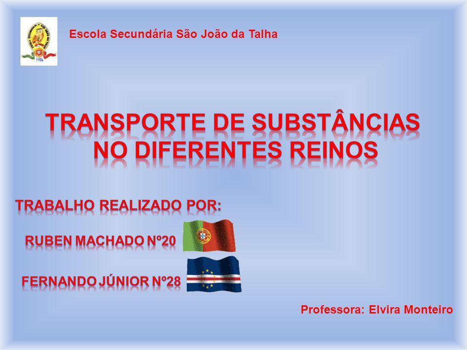 Professora: Elvira Monteiro Escola Secundária São João da Talha