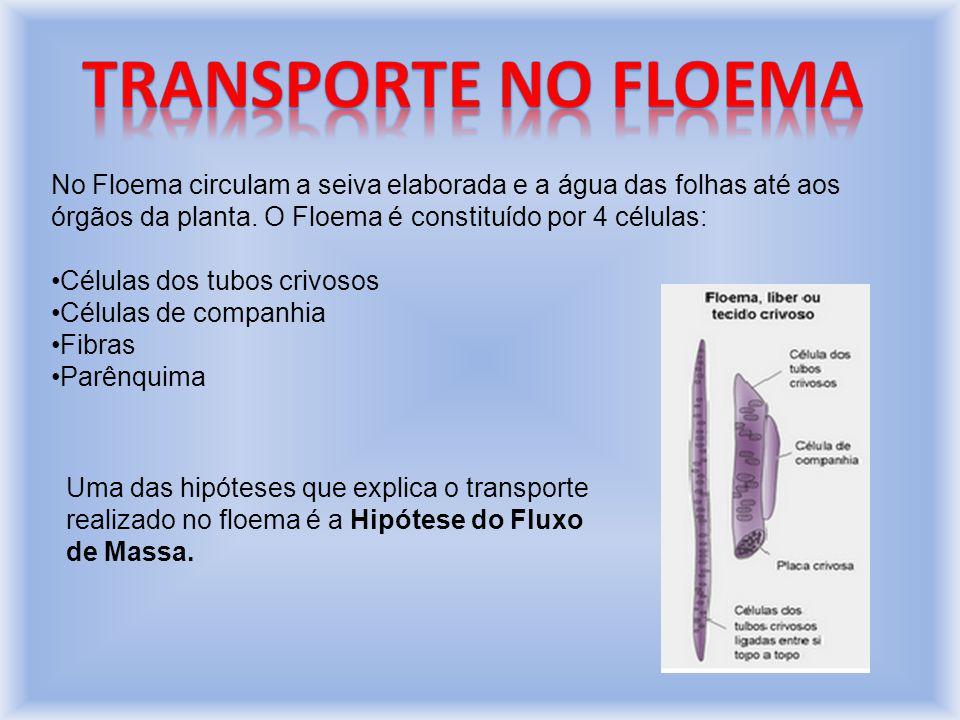 No Floema circulam a seiva elaborada e a água das folhas até aos órgãos da planta.