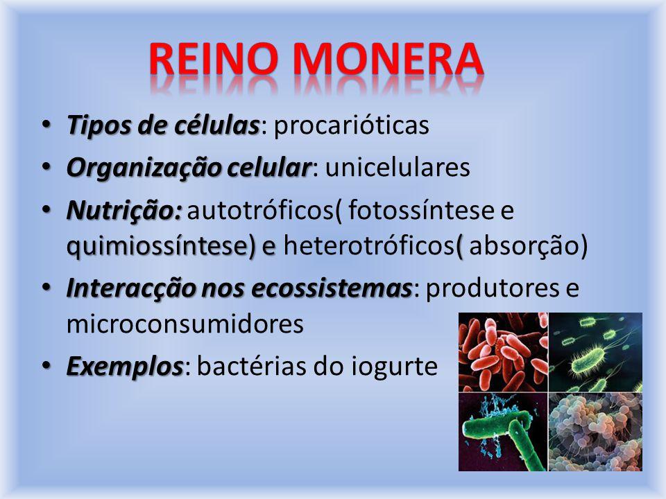 No Reino Monera, os seres heterotróficos (microconsumidores) obtêm nutrientes para o interior da célula através da absorção.