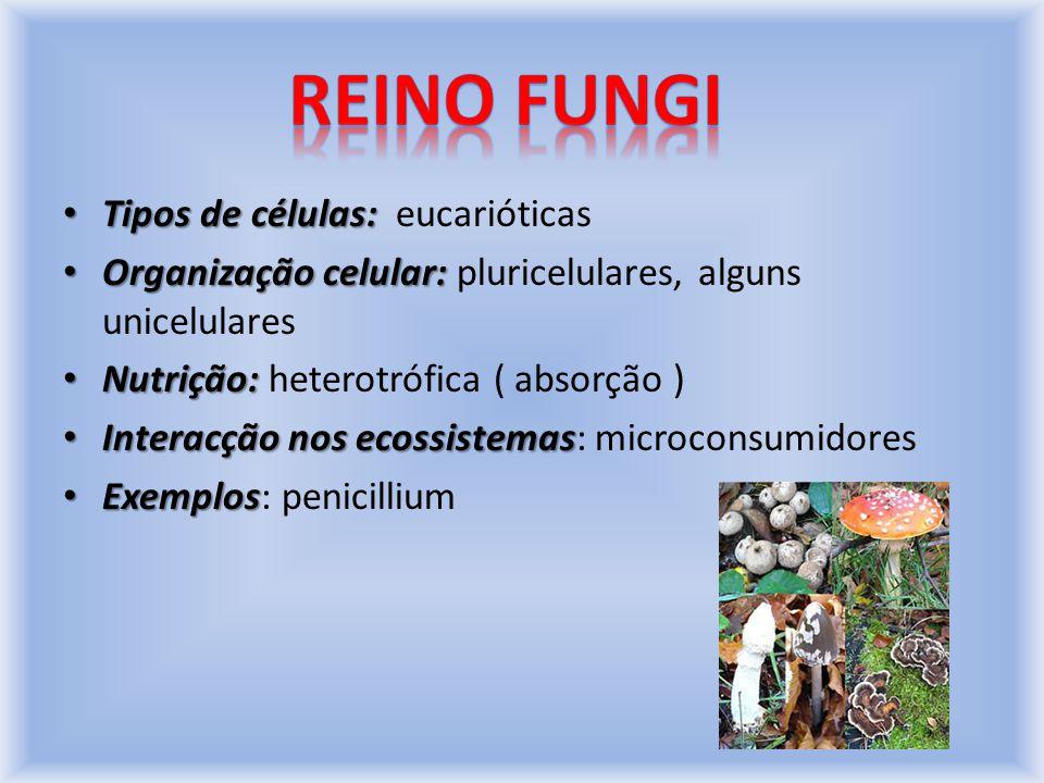 Tipos de células: Tipos de células: eucarióticas Organização celular: Organização celular: pluricelulares, alguns unicelulares Nutrição: Nutrição: heterotrófica ( absorção ) Interacção nos ecossistemas Interacção nos ecossistemas: microconsumidores Exemplos Exemplos: penicillium