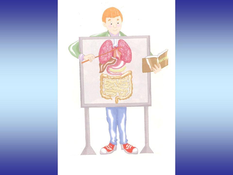 O sangue ao percorrer os alvéolos pulmonares faz as trocas gasosas, isto é, liberta o e outras impurezas, recebendo em troca o oxigénio proveniente da inspiração.