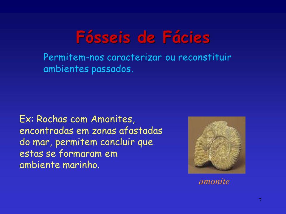 7 Fósseis de Fácies Ex: Rochas com Amonites, encontradas em zonas afastadas do mar, permitem concluir que estas se formaram em ambiente marinho. amoni