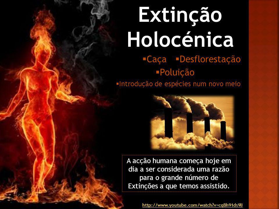 Extinção Holocénica A acção humana começa hoje em dia a ser considerada uma razão para o grande número de Extinções a que temos assistido. Desfloresta