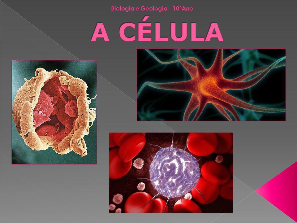 Conhecimento da célula O conhecimento dos processos biológicos depende do conhecimento da célula enquanto unidade fundamental da vida As células eram pouco conhecidas até ao aparecimento do microscópio Leeuwenhoek-1600