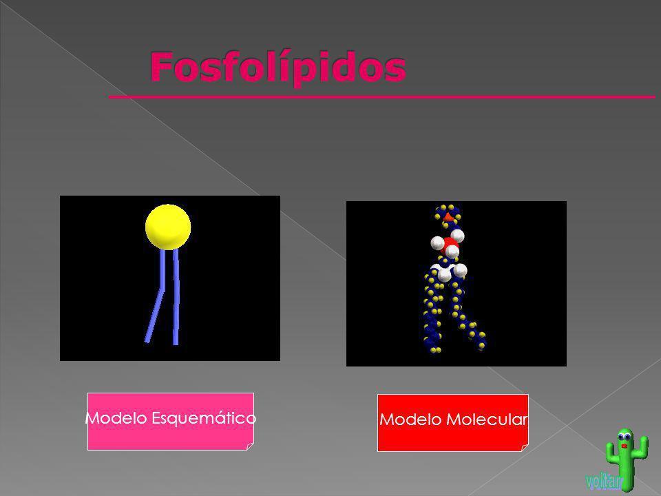 Modelo Esquemático Modelo Molecular
