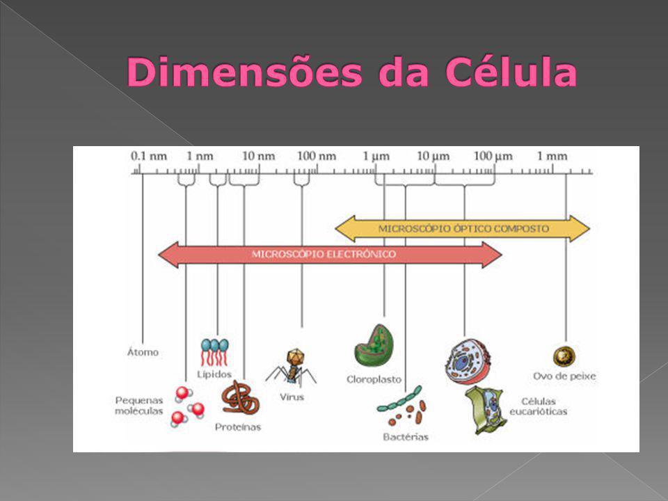 Parede celular Lamela mediana Espaço intercelular Membrana plasmática Parede celular Confere suporte e protecção às células vegetais