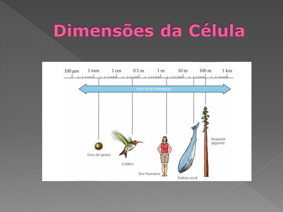 Organização biológica – Os seres vivos apresentam diferentes níveis de organização celular.
