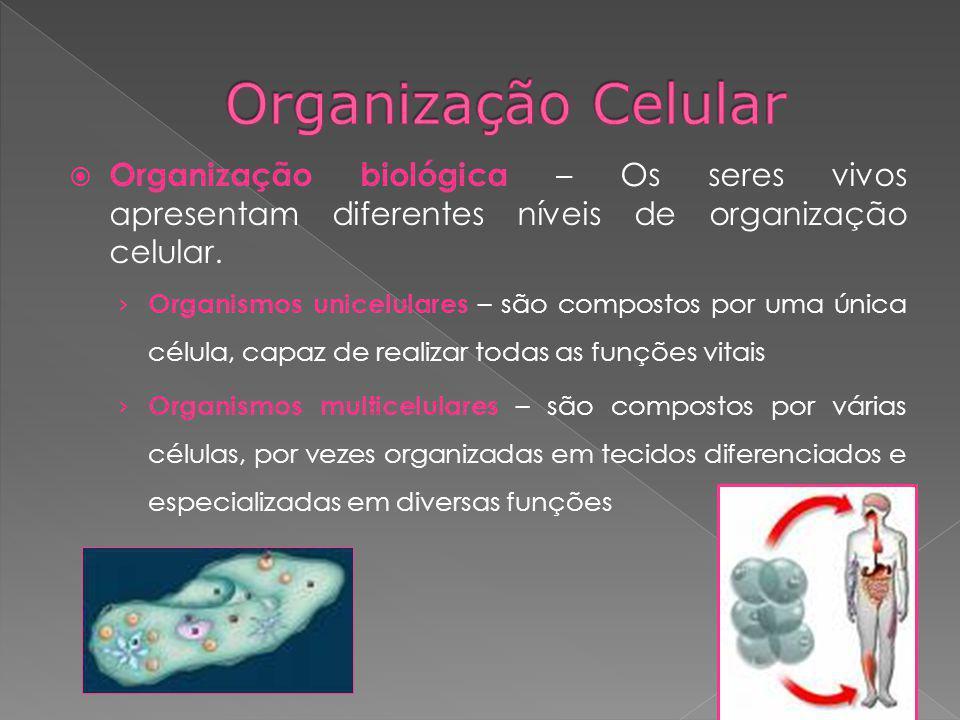 Organização biológica – Os seres vivos apresentam diferentes níveis de organização celular. Organismos unicelulares – são compostos por uma única célu