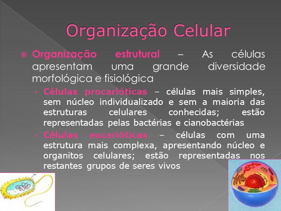 Organização estrutural – As células apresentam uma grande diversidade morfológica e fisiológica Células procarióticas – células mais simples, sem núcl