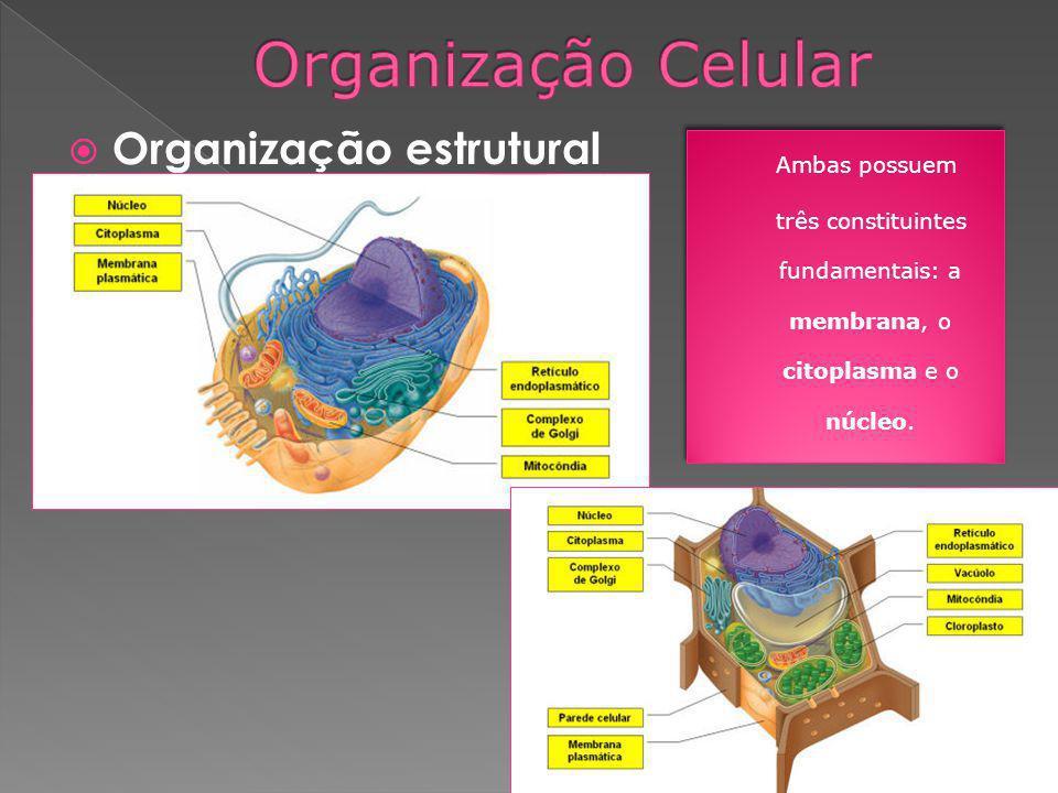 Organização estrutural Ambas possuem três constituintes fundamentais: a membrana, o citoplasma e o núcleo. Ambas possuem três constituintes fundamenta
