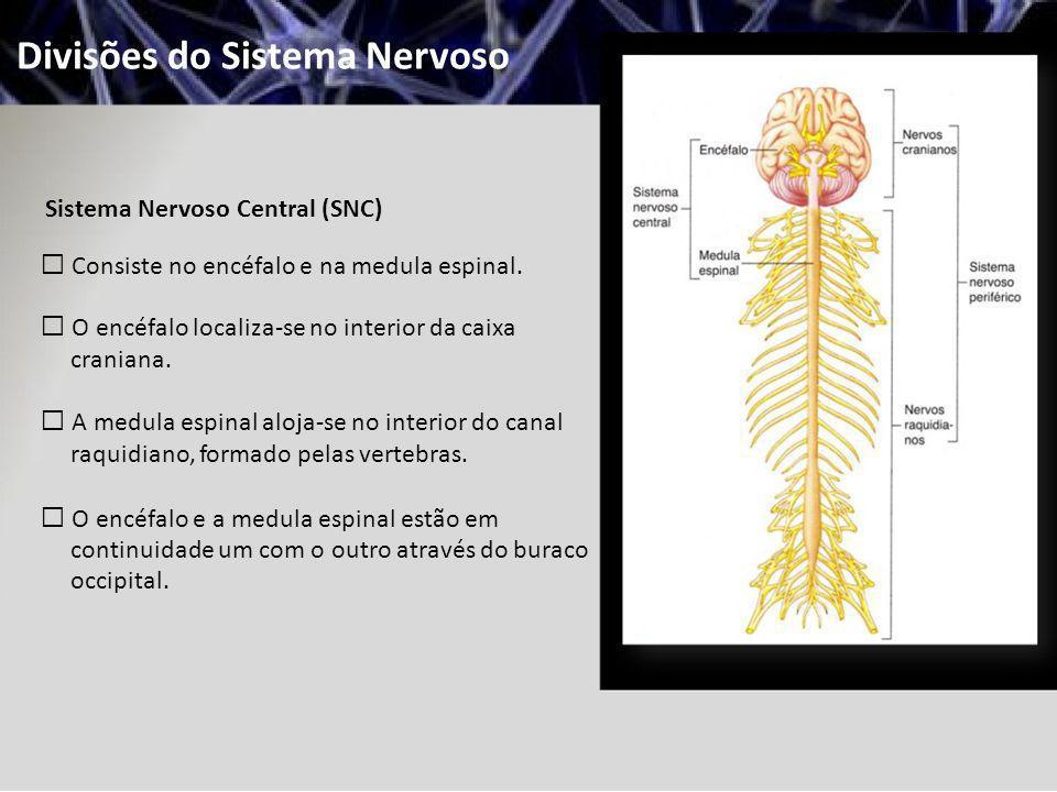 Divisões do Sistema Nervoso Sistema Nervoso Central (SNC) Consiste no encéfalo e na medula espinal. O encéfalo localiza-se no interior da caixa crania