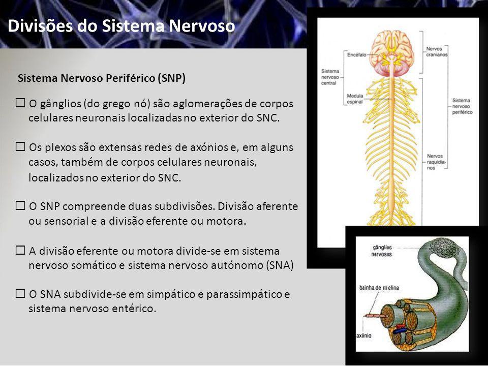 Divisões do Sistema Nervoso Sistema Nervoso Periférico (SNP) O gânglios (do grego nó) são aglomerações de corpos celulares neuronais localizadas no ex