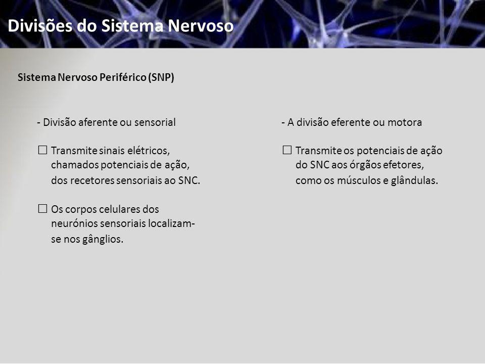 Divisões do Sistema Nervoso Sistema Nervoso Periférico (SNP) - Divisão aferente ou sensorial Transmite sinais elétricos, chamados potenciais de ação,