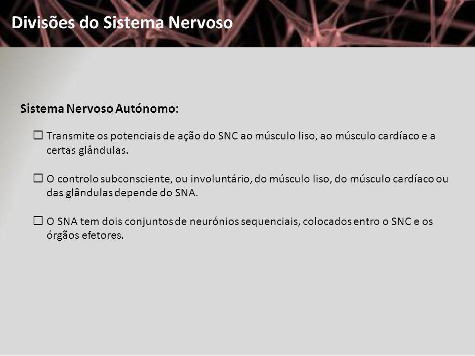 Divisões do Sistema Nervoso Sistema Nervoso Autónomo: Transmite os potenciais de ação do SNC ao músculo liso, ao músculo cardíaco e a certas glândulas
