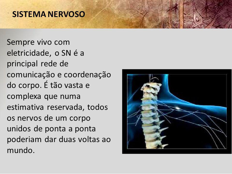 SISTEMA NERVOSO FUNÇÕES Deteta informação sensorial Processa e responde à informação sensorial (integração) Mantém a homeostasia Centro das atividades mentais Controla os movimentos do corpo através dos músculos esqueléticos