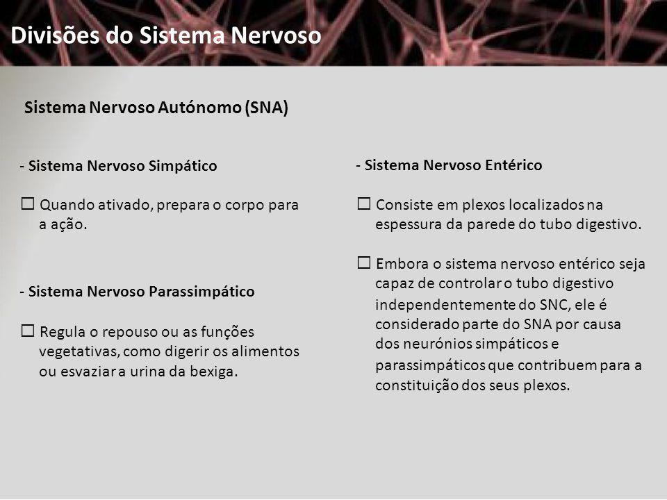 Divisões do Sistema Nervoso Sistema Nervoso Autónomo (SNA) - Sistema Nervoso Simpático Quando ativado, prepara o corpo para a ação. - Sistema Nervoso
