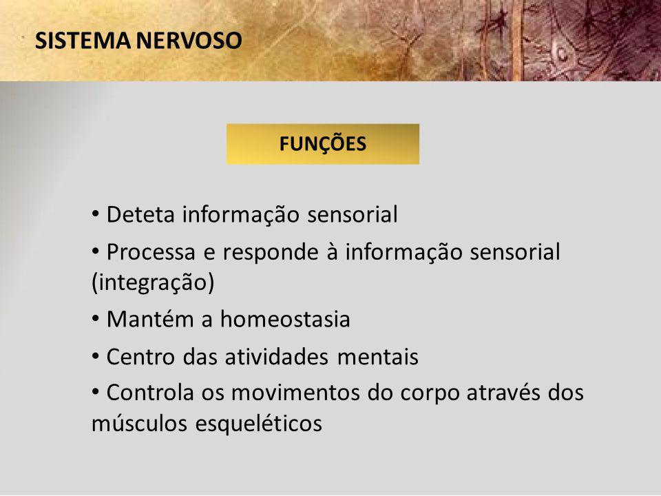 SISTEMA NERVOSO FUNÇÕES Deteta informação sensorial Processa e responde à informação sensorial (integração) Mantém a homeostasia Centro das atividades