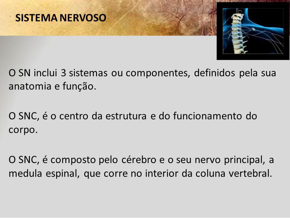 SISTEMA NERVOSO O SN inclui 3 sistemas ou componentes, definidos pela sua anatomia e função. O SNC, é o centro da estrutura e do funcionamento do corp