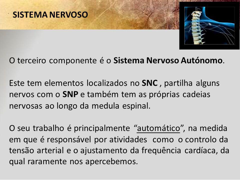 SISTEMA NERVOSO O terceiro componente é o Sistema Nervoso Autónomo. Este tem elementos localizados no SNC, partilha alguns nervos com o SNP e também t