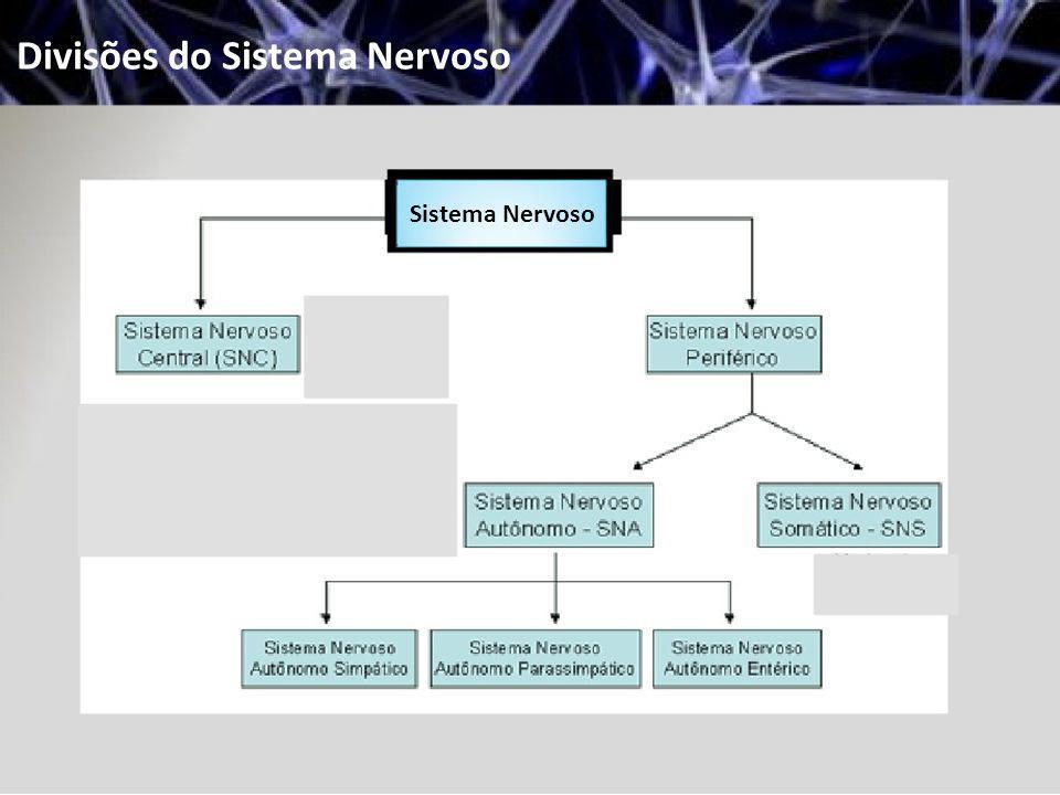 Divisões do Sistema Nervoso Sistema Nervoso Autónomo: Transmite os potenciais de ação do SNC ao músculo liso, ao músculo cardíaco e a certas glândulas.