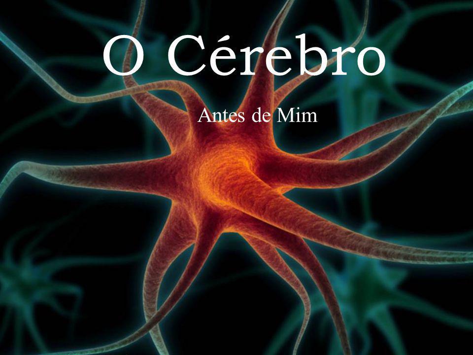 O Cérebro Antes de Mim